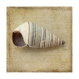 Sepia Shell IV Prints by Judy Stalus