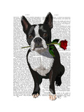 Boston Terrier with Rose in Mouth Premium Giclee Print by  Fab Funky