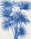 Palm Imprint II Giclée-tryk af  The Vintage Collection