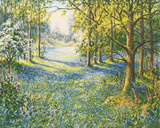 Bluebell Valley Giclee Print by John Halford Ross