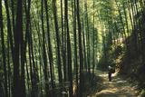 Bamboo Sea Giclee Print by Basil Pao
