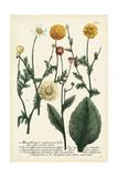 Saffron Garden II Prints by  Weinmann