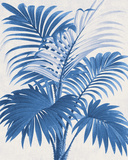 Palm Imprint I Giclee Print by  The Vintage Collection