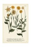 Saffron Garden III Posters by  Weinmann