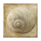 Sepia Shell VI Reproduction giclée Premium par Judy Stalus