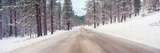 Icy Road and Snowy Forest, California Photographic Print by Panoramic Images