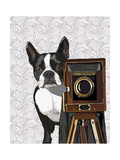 Boston Terrier Photographer Print by  Fab Funky