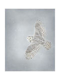 Owl in Flight II Posters by  PHBurchett
