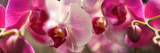Close-Up of Pink Orchid Flowers Fotografiskt tryck av Panoramic Images