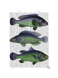 Blue and Green Fish Trio Prints by  Fab Funky