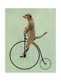 Meerkat on Black Penny Farthing Plakater af  Fab Funky