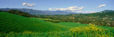 Field in Springtime, Ojai, California Photographic Print by Panoramic Images