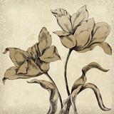 Paper Tulip I Impressão giclée por Maria Mendez