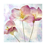 Pink Hyacinth IV Prints by Honey Malek