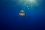 An Oceanic Whitetip Shark Swimming in the Open Ocean Photographic Print by Jim Abernethy