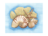 Seashells and Seafan I Premium Giclee Print by Wendy Russell