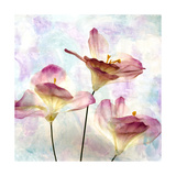 Pink Hyacinth VI Prints by Honey Malek