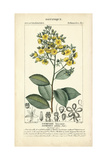 Botanique Study in Yellow II Prints by  Turpin