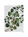 Squash Vine 4 Print by  Fab Funky