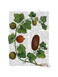 Squash Vine 3 Prints by  Fab Funky