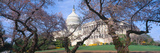 Us Capitol Building and Cherry Blossoms, Washington Dc Photographic Print by Panoramic Images