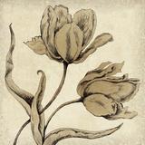 Paper Tulip II Impressão giclée por Maria Mendez