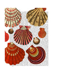 Red Clam Shells Premium Giclee Print by  Fab Funky