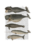 Five Vintage Whales Art by  Fab Funky