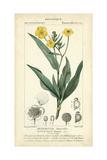 Botanique Study in Yellow III Plakat av  Turpin