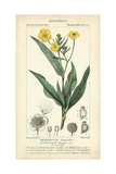 Botanique Study in Yellow III Poster by  Turpin