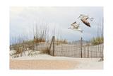 Water Bird Glimpse I Prints by  PHBurchett