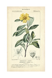 Botanique Study in Yellow I Posters by  Turpin