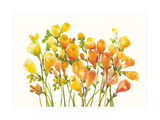 Freesia I Prints by Tim O'toole