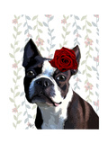 Boston Terrier with Rose on Head Poster by  Fab Funky