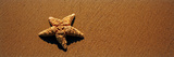 Starfish on the Beach, Malibu, Los Angeles County, California, Usa Photographic Print by Panoramic Images