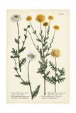 Saffron Garden IV Poster by  Weinmann