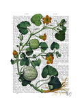 Squash Vine 2 Poster by  Fab Funky