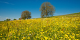 Wildflowers in a Field, Baden-Wurttemberg, Germany Photographic Print by Green Light Collection