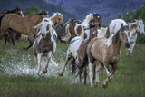 Horses Running Through a Wet Pasture Photographic Print by Jay Dickman