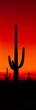 Silhouette of Saguaro Cactus at Sunset, Arizona, Usa Photographic Print by Panoramic Images