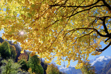 A Golden Maple Tree in an Autumn Landscape in the Alborz Mountains Photographic Print by Babak Tafreshi