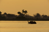 A Silhouetted African Elephant Crossing a Spillway at Sunset Photographic Print by Beverly Joubert