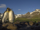 The Mountains Surrounding Gold Harbor Form a Backdrop for a Pair of King Penguins Photographic Print by Jay Dickman