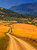 Twisty Road, Near Casabermeja, Malaga Province, Andalusia, Spain Photographic Print by Green Light Collection
