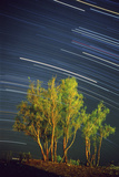 Colorful Star Trails Above Tamarisk or Salt Cedar Trees. Sirius and Orion's Stars are Brightest Photographic Print by Babak Tafreshi