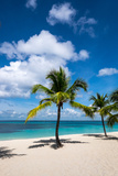 Palm Trees and their Shadows on a Pristine Caribbean Sea Beach Photographic Print by Jonathan Irish