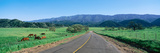 Country Road, California Photographic Print by Panoramic Images