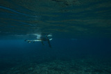 Underwater View of a Surfer Sitting on a Surfboard Photographic Print by Andy Bardon