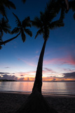 A Silhouetted Palm Tree on a Caribbean Sea Beach at Sunset Photographic Print by Jonathan Irish