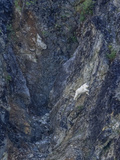 A Mountain Goat, Oreamnos Americanus, Climbing a Steep Mountain Side Photographic Print by Jay Dickman